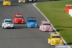 Bugs racing