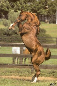 Quarto-de-milha  Cavalos de raça e esporte<.Em sintonia com o mundo equestre.> - UOL Fotoblog