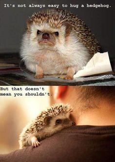 Look at this beautiful blog full ofbaby animals!