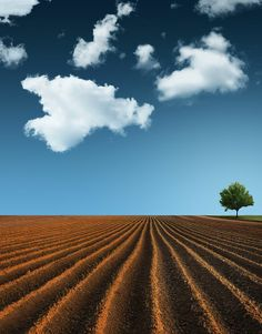 Clouds, Tree, Land and Sky