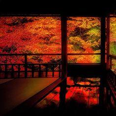 床紅葉 . 京都  八瀬  瑠璃光院 . Rurikoin. /  kyoto.Japan . 2015.11.18 . . 瑠璃光院に行ったら必ず撮らないと思って撮ったのに、ポストしわすれてました。 遅まきながら。 . . #japan #kyoto #京都 #八瀬 #瑠璃光院 #床紅葉 #紅葉 #秋 #