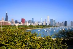 10 water pollution facts for Kids - Parents must know Chicago Lake, Chicago River, Chicago City, Chicago Skyline, New York Skyline, Chicago Illinois, Water Pollution Facts, Saint Lawrence River, Manitoulin Island