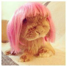 ❤ I died of cuteness (Rambo bunny from bunnymama's instagram.)
