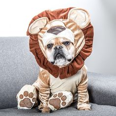 French bulldog in lion costume