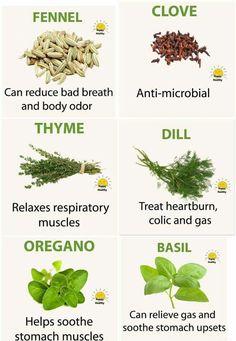Sebi approved herbs