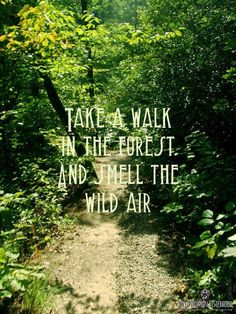 Take a walk in the forest and smell the Wild Air