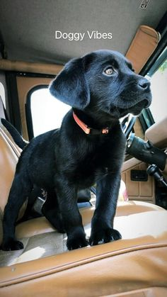 Cute Little Animals, Cute Funny Animals, Funny Dogs, Cute Animals Puppies, Cute Dogs And Puppies, Super Cute Puppies, Cute Baby Dogs, Adorable Dogs, Sweet Dogs