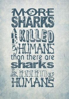 Save the sharks #conservation