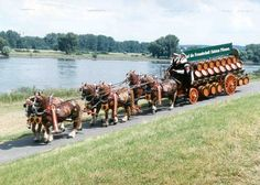 Nice to see - six Schleswiger driving around a lake in Schleswig-Holstein. Picture from the Holsten-Brewery.