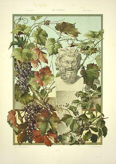 Anton SEDER - Art Nouveau Prints 1890 - Bacchus, Vines, genuine gold paint