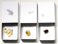 Match boxes for specimens.  Observational drawings.