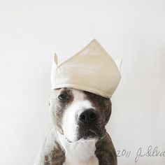 pit bull with a crown.