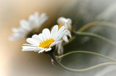 Wonderful world - Tine fotografie