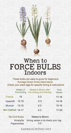 When to Force Bulbs Indoors