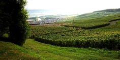 Vineyard on the Reims Montagne Champagne Region, Wines, Vineyard, Images, Travel, Outdoor, Outdoors, Viajes, Trips