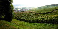 Vineyard on the Reims Montagne Champagne Region, Wines, Vineyard, Images, Travel, Outdoor, Vine Yard, Voyage, Trips