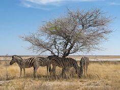 Wenig Schatten ist besser als keiner ..., via Flickr. Animals, National Forest, Shadows, Animales, Animaux, Animal, Animais