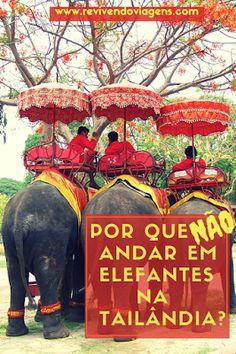 Por que não andar em elefantes na Tailândia?  Conheça a verdade sobre o cruel turismo de exploração de elefantes na Tailândia e em outros países asiáticos.