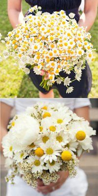 Yellow bouquet: daisies
