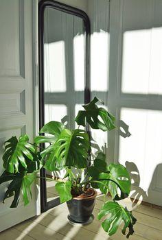 Fensterblatt-Roombeez