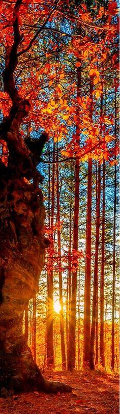 Forever Autumn...