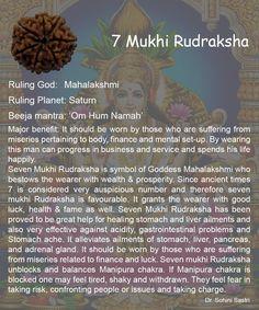 7 Mukhi Rudraksha..