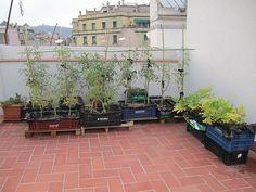 Maceto Huerto: Cómo empezar un huerto ecológico en tu terraza | ECOagricultor