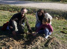 Cómo plantar un árbol y sobrevivir en el intento