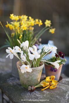 Floral      (via TumbleOn)