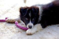 Zondag naar een vriendin geweest, der nieuwe huisje gaan bezien gelijk een BBQ en natuurlijk Simon de nieuwe pup gaan bewonderen, een echte cutie (I am so in Love) Een deugnietje hoor.