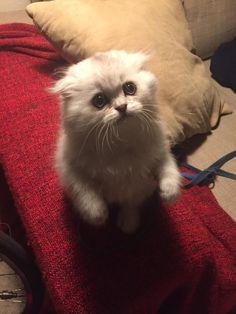 Esse Gato de Botas da vida real. | 29 fotos que vão deixar seu dia um pouquinho melhor