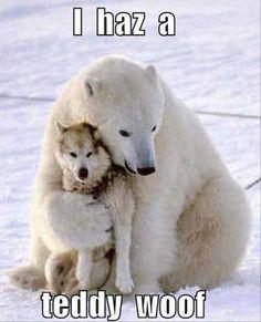 cute teddy bear, polar bear and wolf