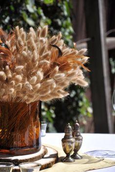 ETSY(CreteDriftwood) - Dried Grass, 17 Stems Hares Tail, Bunny Tail Grass, Lagurus Ovatus $6AUD