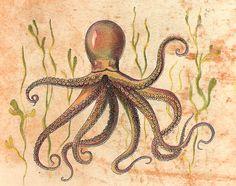 Octopus / Polvo by CGoulao, via Flickr