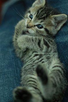 Soo cute.
