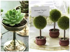 When it comes to eco-friendly and budget-friendly wedding reception centerpieces nothing beats potted plants. Potted Plant Centerpieces, Terrarium Wedding Centerpiece, Hanging Potted Plants, Plant Wedding Favors, Hanging Ferns, Pot Plants, Table Centerpieces, Fern Wedding, Wedding Reception Flowers