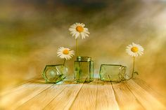 Oh wow, this is stunning! Three daisies by Veikko Suikkanen at redbubble.com