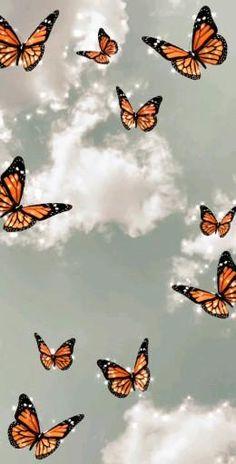 live wallpaper livewallpaper butterfly borboleta Tumblr vsco aesthetic
