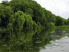 Rainy GIF.
