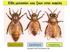 Bugs And Insects, Preschool Activities, Kindergarten, Montessori, Kindergartens, Preschool, Preschools, Pre K, Kindergarten Center Management