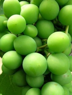 Green | Grün | Verde | Grøn | Groen | 緑 | Emerald | Colour | Follow my pinterest: rckeyru #rckeyru #rckey #rckeypn