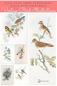 Welcome Spring with 6 Printable Vintage Bird Illustrations - The Birch CottageAugust's Free Printable Vintage Botanical Cards {Set Four} - The Birch Cottage Vintage Bird Illustration, House Illustration, Botanical Illustration, Illustrations, Decoupage, Vintage Birds, Vintage Art, Vintage Postcards, Vintage Prints