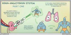 Renin angiotensin system 1