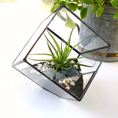 Glass Terrarium Cube, Square Planter with Air Plant, DIY --- this NEEDS to be my centerpiece
