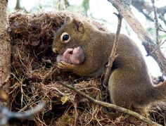 mama squirrel and her newborn baby <3