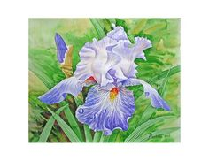 Iris Drops of Dew printable poster gift for her summer