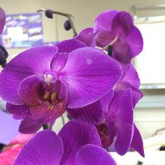 #jotainlilaa #purple #lila #orchidea #flower #kukka #yrittäjä
