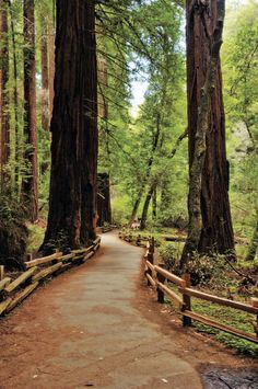 Muir Woods: Go Take A Hike in California! Sacramento California, California Dreamin', Northern California, Roseville California, Get Outdoors, The Great Outdoors, Places To Travel, Places To See, Lake Erie