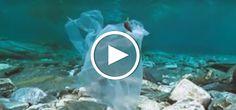 Mit erschreckenden Zahlen und Fakten macht dieses Video auf den Plastikmüll in Deutschland, Europa und im Meer aufmerksam.