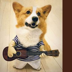 Pet Dog Guitar Clothes Costume Fancy Dress Halloween Day Funny Outfit Party Ropa Para Perros Hondenkleding Manteau Chien photo ideas from Pet Supplies Welsh Corgi Pembroke, Dog Halloween Costumes, Pet Costumes, Corgi Costume, Animal Costumes, Pet Shop, Cute Corgi Puppy, Corgi Dog, Corgi Funny